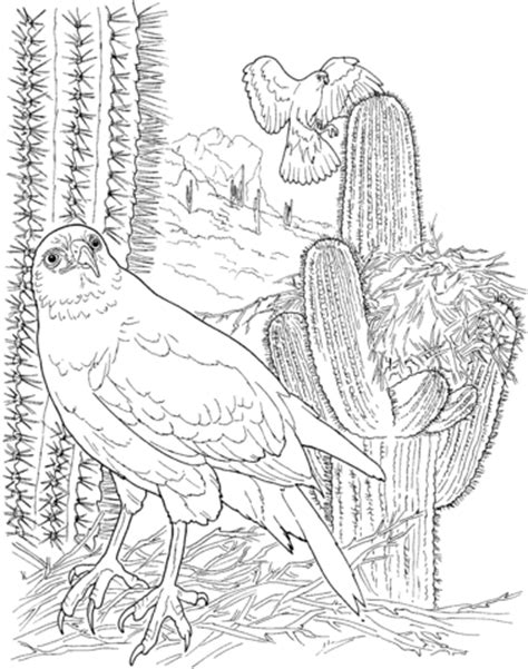 harris s hawk in saguaro forest coloring page
