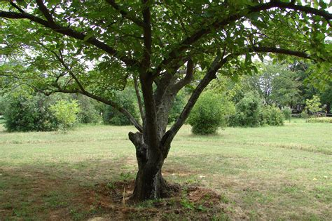 13 trees you should never plant in your yard home and gardening ideas