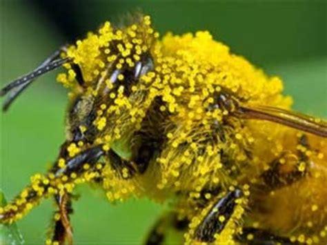 Vitamin Honey Bee Pollen 10 best uses for bee pollen evitamins