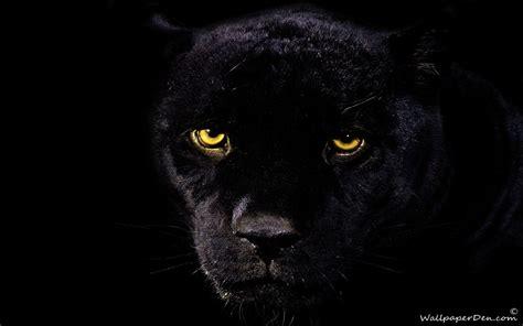 black panther wallpaper 1920x1200 45760