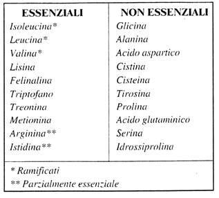 aminoacidi essenziali alimenti aminoacidi abc di biochimica project invictus
