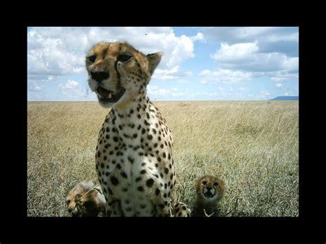 Tshirt Natgeo Wildlife sengety kid great serengeti safari c u on safari
