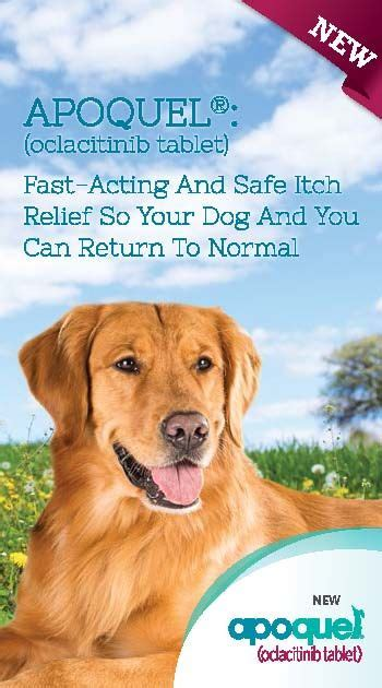 side effects of apoquel for dogs 17 best images about fur on allergies and for dogs