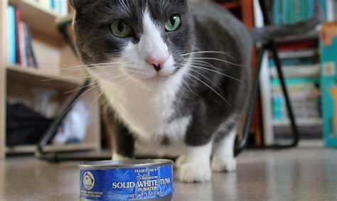 can dogs eat prunes how much tuna can a cat eat tips