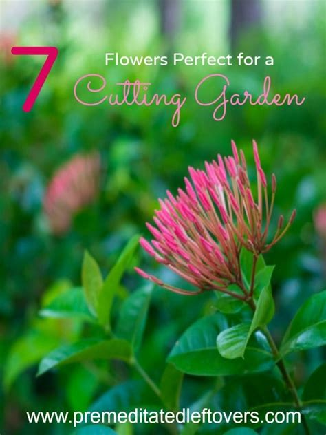 flower cutting garden 7 flowers for your cutting garden