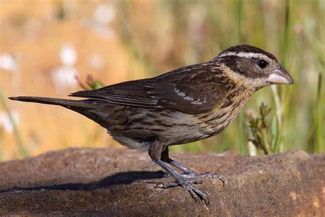 top 28 birds san diego san diego birding birding
