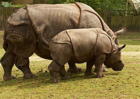 lebih foto hewan langka  indonesia beserta daerah