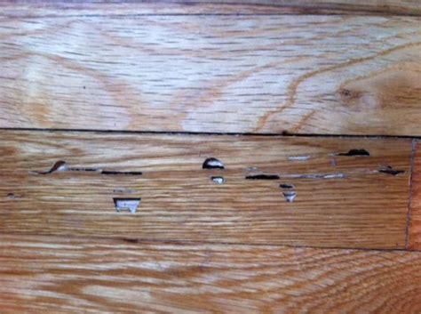 termite custom woodworks how to fix termite damaged wood floors thefloors co
