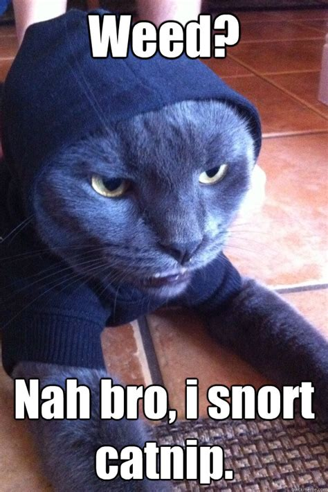 is catnip bad for dogs nah bro i snort catnip hoodie cat quickmeme