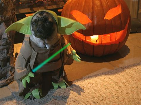 pug in yoda costume 9 dogs who totally nailed rover
