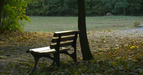 empty bench empty bench in the park stock footage video 2290106