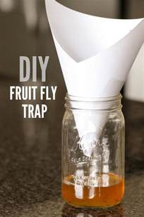 diy fruit fly trap