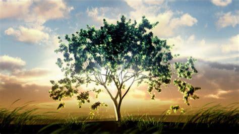 Baum Wie Haus Pflanzen by Baum Pflanzen Bellandris Baum Pflanzen Pin