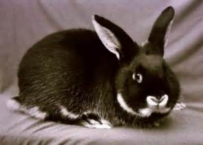 Sable animal image search results