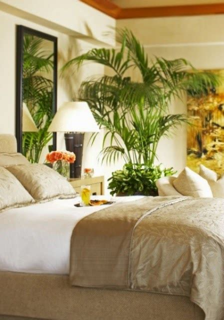 Plants For The Bedroom by Indoor Gardening Plants For Bedroom