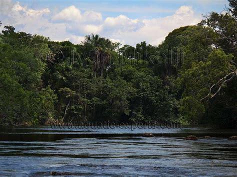 Imagenes Del Estado Amazonas Venezuela | rio cataniapo