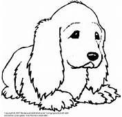 Diverse Hunde 1  Medienwerkstatt Wissen &169 2006 2017