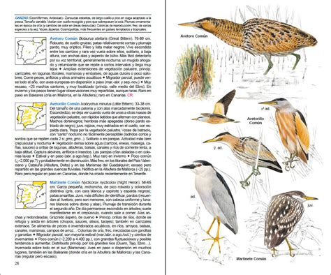 guia para identificar aves aves de espa 241 a lynx edicions