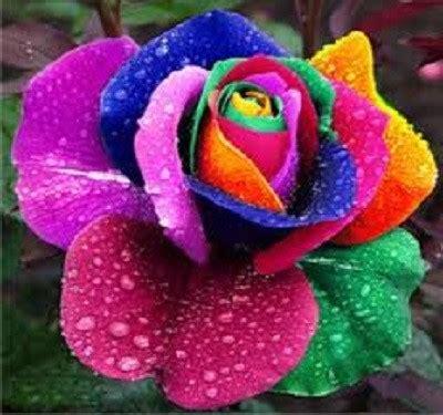 imagenes flores mas lindas todo mundo espectaculares imagenes de las flores mas lindas del mundo