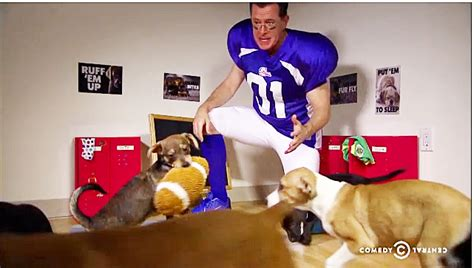 stephen colbert puppies stephen colbert s stirring half time speech at the puppy bowl crooks and liars