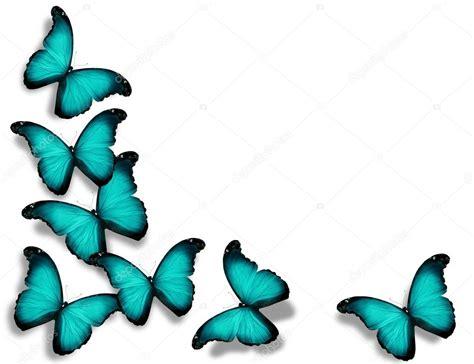 imagenes mariposas turquesas mariposas de bandera azul turquesa aisladas sobre fondo