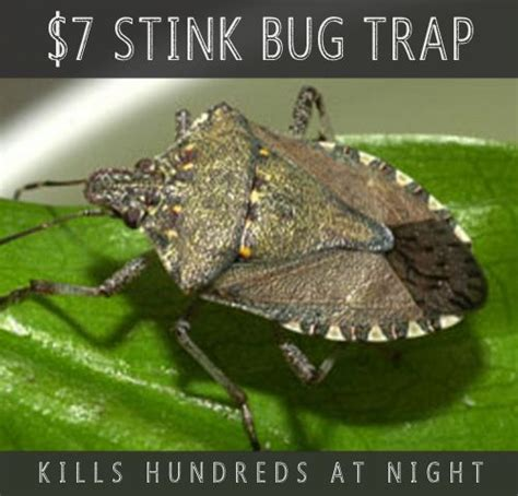 bug trap ideas  pinterest pest spray homemade ant killer  mosquito yard spray