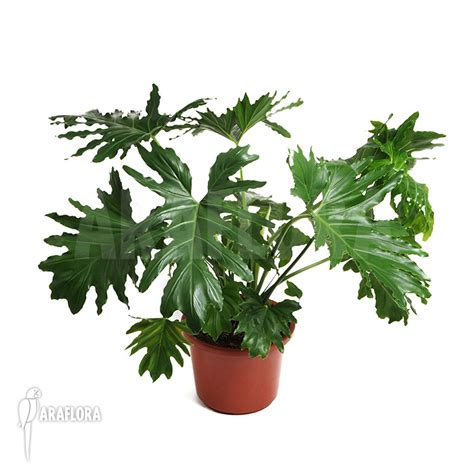 indoor plants no sunlight no sun plants indoor orchid cactus houseplant