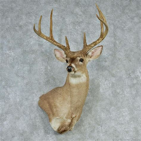 deer head whitetail deer head for sale 12742 the taxidermy store