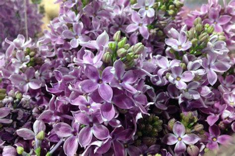fiori per matrimonio a giugno i fiori migliori per un matrimonio a giugno lombarda flor