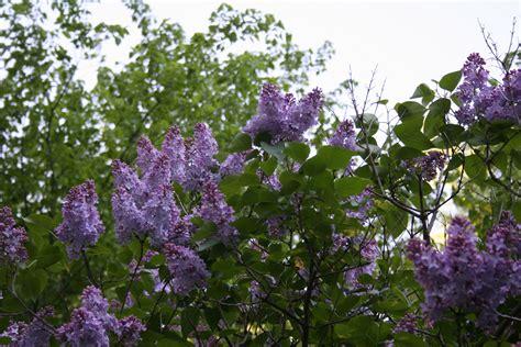 paint colors minnesota prairie roots lilac images reverse search
