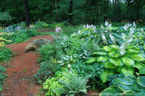 shade garden janet davis explores colour