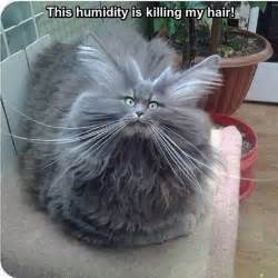 Bad Day Hair Bad Hair Day Cat Pictures Photos And Images For
