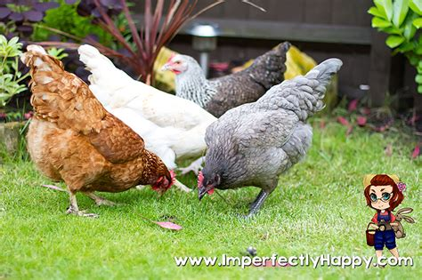 backyard homesteading backyard homesteading is just commonsense start now