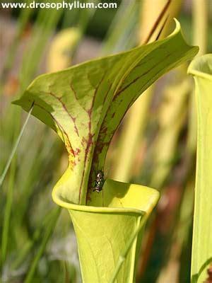 Kellerasseln Fressen Pflanzen by Anfngertipps Fr Fleischfressende Pflanzen