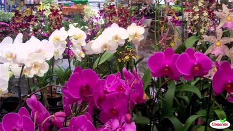 how to get orchids to bloom again youtube