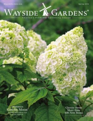 Garden Plants Catalogs by 69 Free Seed And Plant Catalogs Wayside Gardens Plant