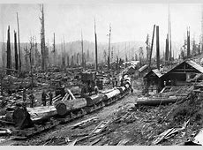 A league of their own: The women of 1900 who started ... Logging Camp History