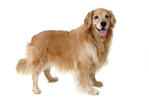 relaxers for dogs canine language let s it houston pettalk