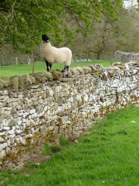 sheep stone interiors sheep stone 1000 ideas about smarty pants on pinterest owl