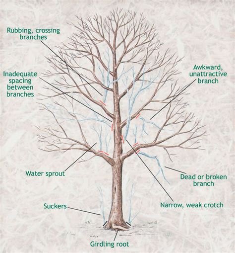 how do you prune fruit trees how and when to prune trees the garden glove