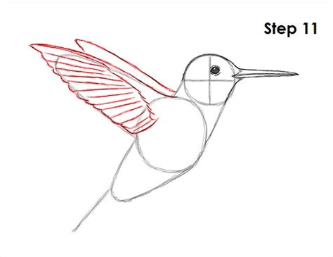 how to draw a hummingbird