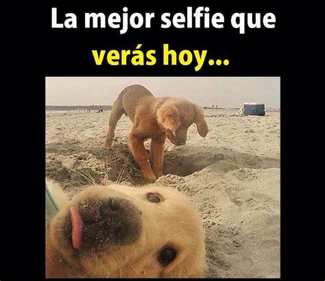 imagenes chistosas en la web 17 mejores ideas sobre fotos de perros graciosas en