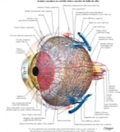 bu bourgery atlas of human 3836534495 vascular supply of eye