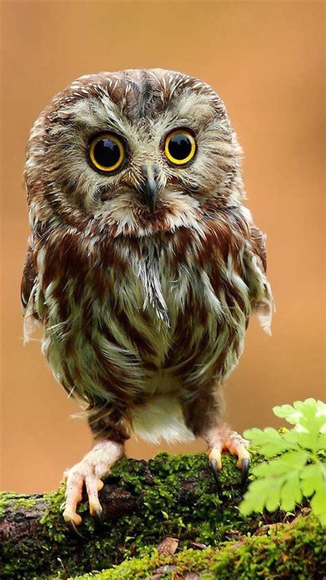 wallpaper iphone 6 owl сова 187 обои для iphone