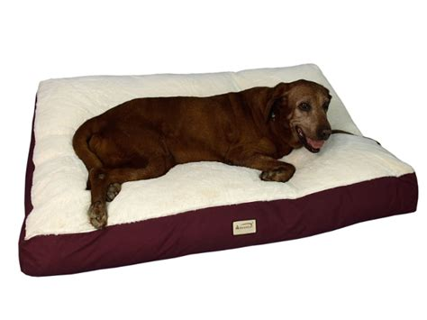 For Big Dogs - best beds for large dogs dogvills