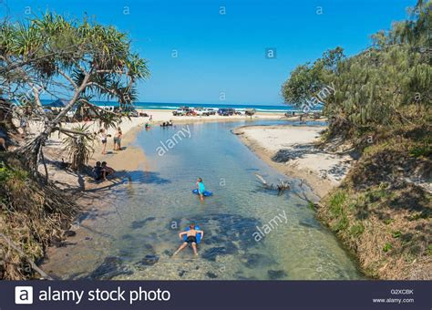 With The Thanks To Ok And River Island by River Eli Creek Great National Park Fraser Island