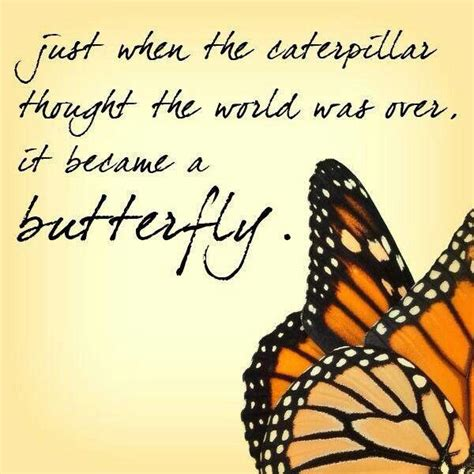 butterfly sayings quotes about and butterflies quotesgram