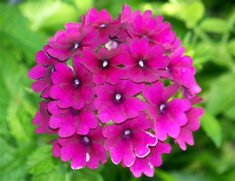 Flowers Pink pink flowers jan 09 2013 17 13 35 picture gallery