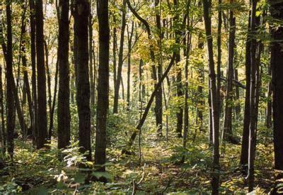 comfort in the woods comfort in the woods southwestdesertlover