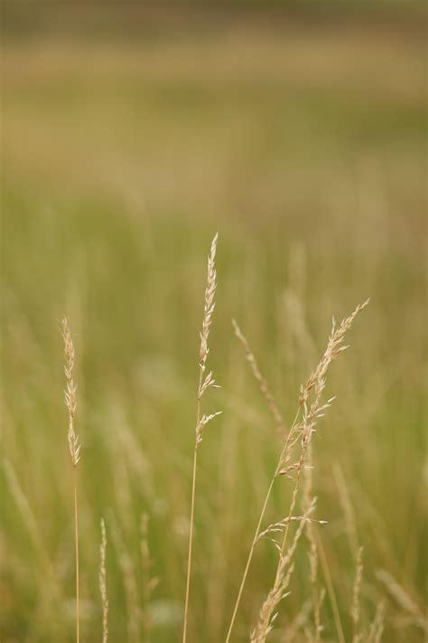 images landscape nature field lawn meadow
